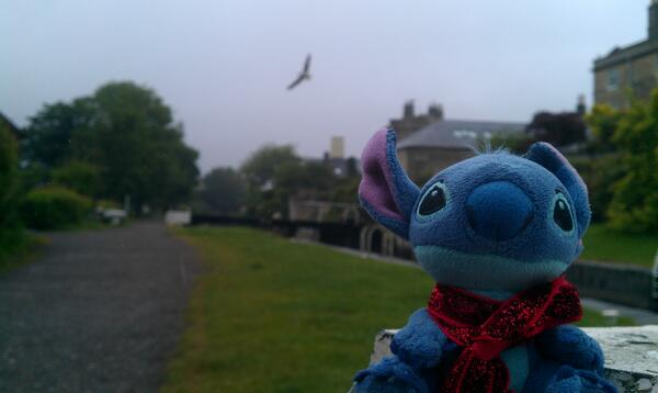 M'colleague Stitch on holiday in Bath.